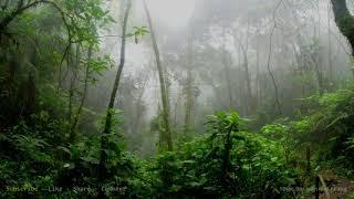 Nghe mà dịu mát tâm hồn với bản nhạc lãng mạn và âm thanh tiếng mưa rơi