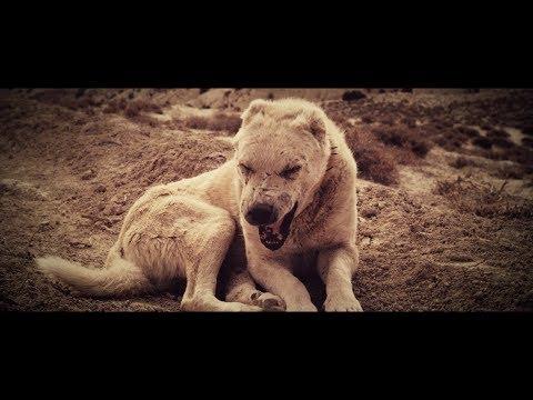 Kontra K - Wölfe (Videoclip)
