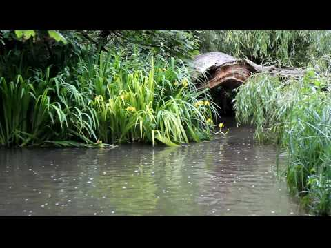 Some Scenes & Sounds Of Water In Watford