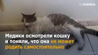 В Турции беременная кошка пришла рожать в центр семейного здоровья!