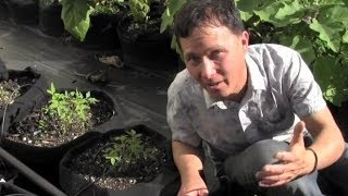 Why Urban Farm Grows Food in 100% Container Garden