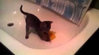 Бешеный котята филя
