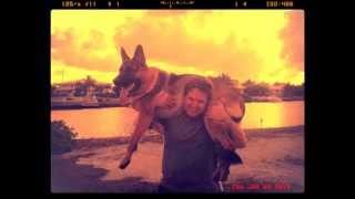 German Shepherd Puppy From 9 Weeks To 2 Years.  102 Lbs