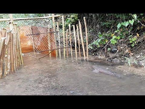 Creative boy make fish trap how to make easy fish trap to for How to make a fish trap for big fish