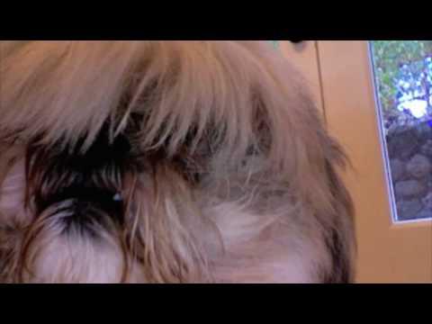 Pixie Got a Haircut!
