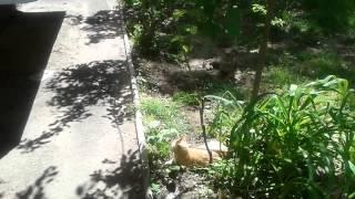 Кошки в подъезде