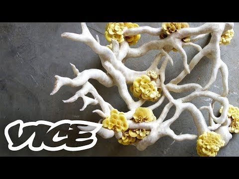 Fungus: The Plastic of the Future