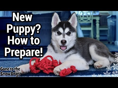 Prepare for a Puppy | Bringing a New Husky Puppy Home