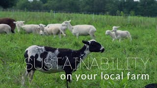 Sustainability On Your Local Farm