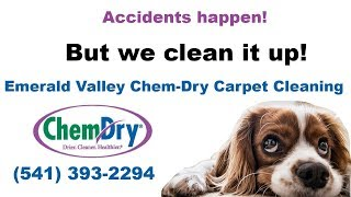 Carpet Cleaning Eugene, Oregon: How To Remove Dog Urine From Carpet - Get Rid Of Dog Urine Odor