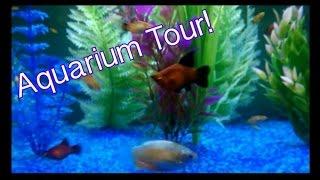 community tropical fish tank   64l
