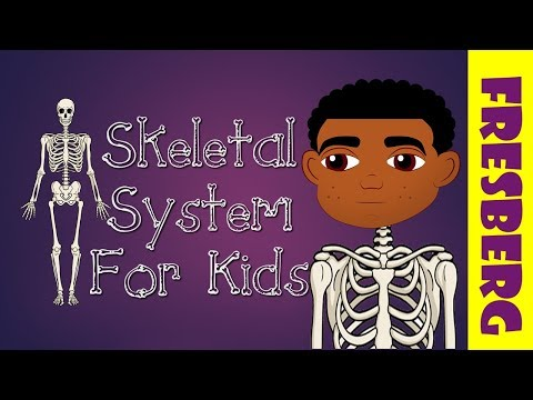 What is the Skeletal System? Introduction to the Skeletal System for kids (Bones System for Kids)