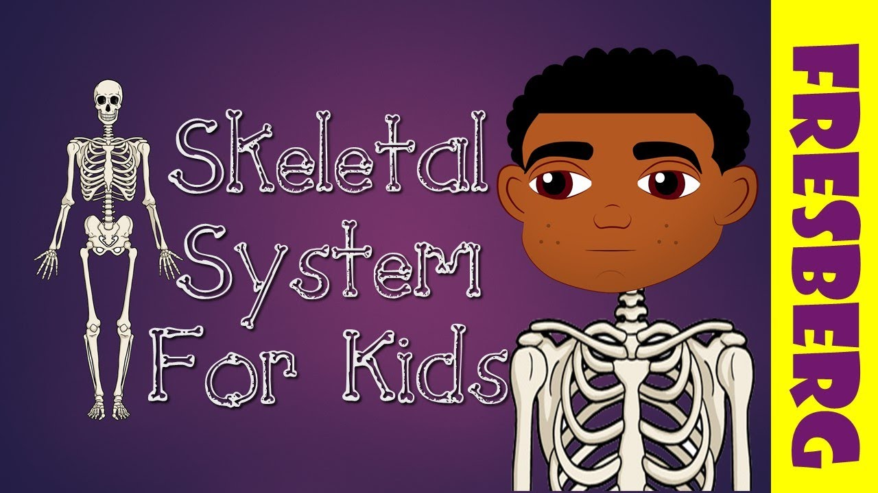 What Is The Skeletal System Introduction To The Skeletal System For