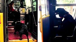 Schlauer Hund nimmt jeden Tag den Bus, um zum Hundepark zu fahren!