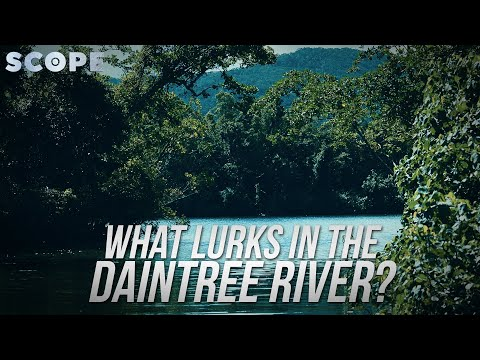 What Lurks In The Daintree River? SCOPE TV