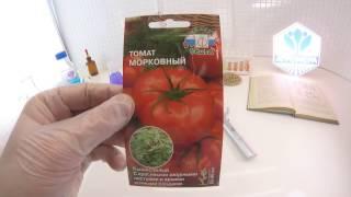 Томат Морковный. СеДеК