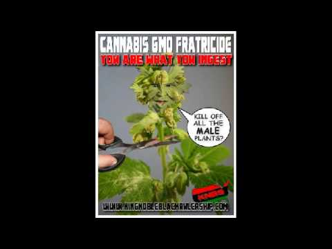King Noble Expose all Cannabis as GMO and Metaphysical Fratracide