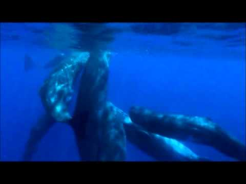 The marine mammals of Greece, our cohabitants in the Greek Seas part2