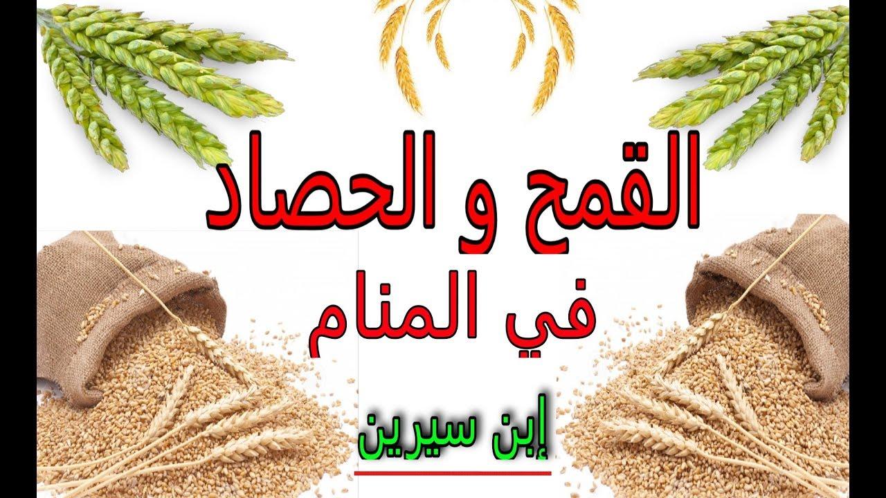 تفسير رؤية القمح و الحصاد في المنام - تفسير حلم الحرث و الزرع