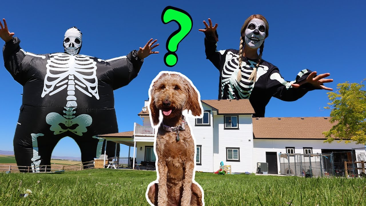 Skeletons Surprise Puppy With GIANT Dance Party!