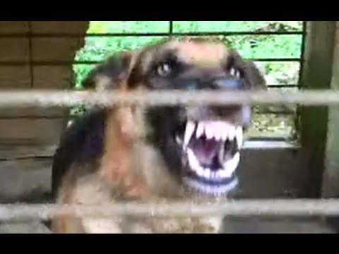 Angry dog is angry !