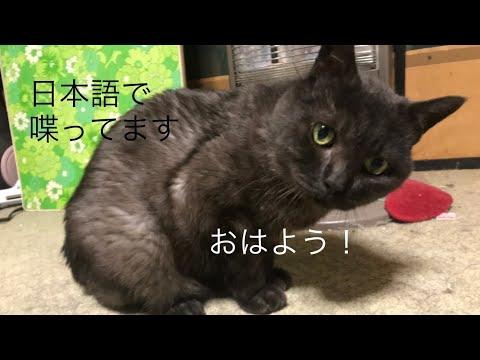 発音バッチリ!日本語でおはようを言ってる。