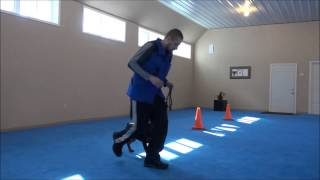 Chief (rottweiler) Trained Puppy Video Demonstration