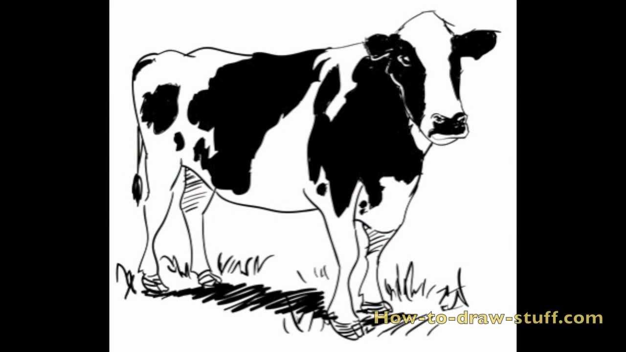 how to draw a cow step by step [ 1280 x 720 Pixel ]