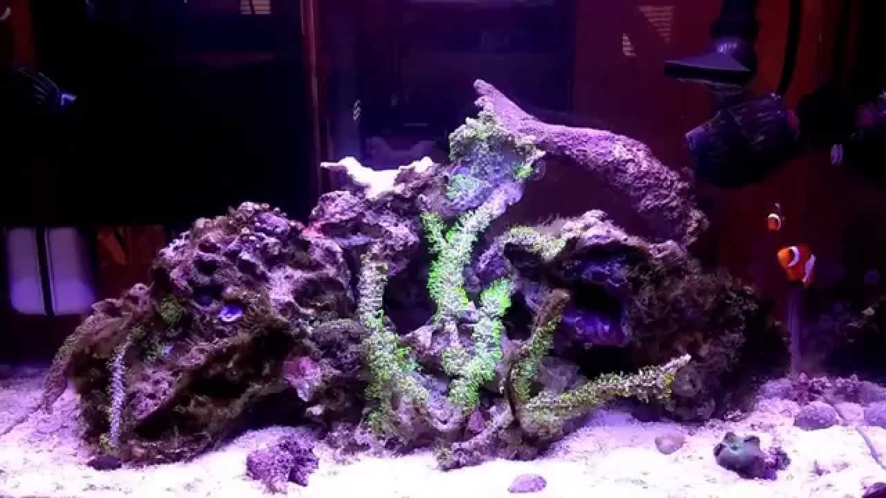 how to build a sea of green setup