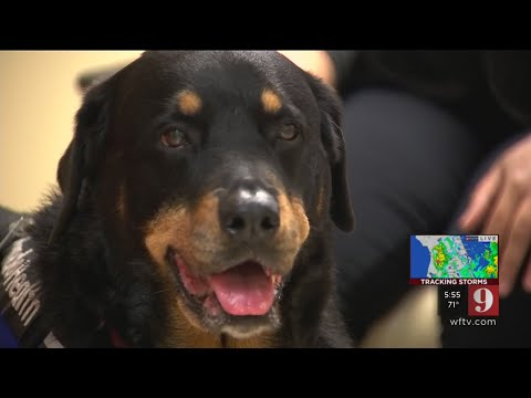 Video: Dose of dog: Orlando Health sees more need for pet therapy