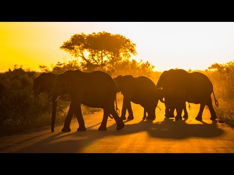 Kruger National Park morning nature sounds: Talamati bush camp | Relaxing & peaceful animal noises