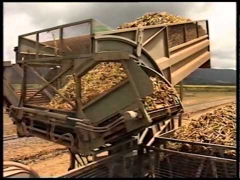 Safety Guidelines for Harvesting and In Field Transport of Sugarcane (2000)