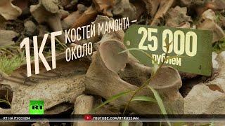 Золотая лихорадка по-сибирски: авантюристы в поисках костей доисторических животных