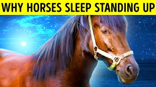 That's Why Horses Can Sleep Standing Up but You Can't