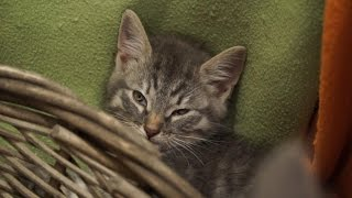 Семинар о котятах. Котокафе «Котики и Люди»