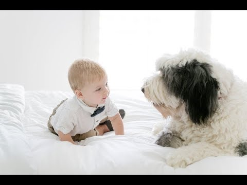Tibetan Terrier plays with a baby