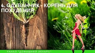 ТОП-10 трав для похудения - Домашний лекарь - выпуск №48