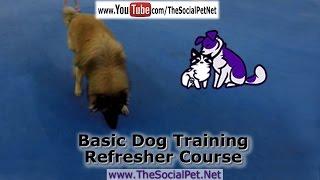 Basic Dog Training Refresher Course