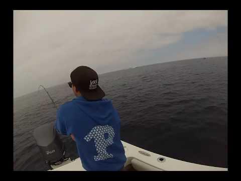 Hot Tuna Bite Near Catalina Island 10/14/16