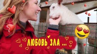 Влюбилась в козлика)