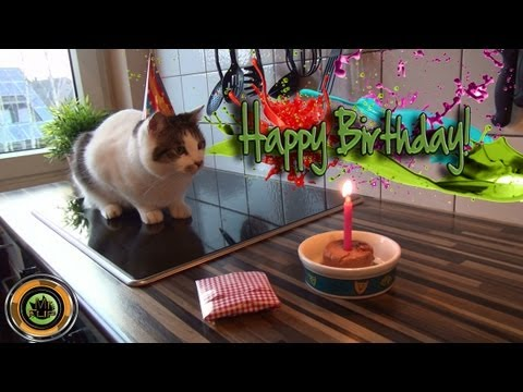 Cat Birthday with a funny end