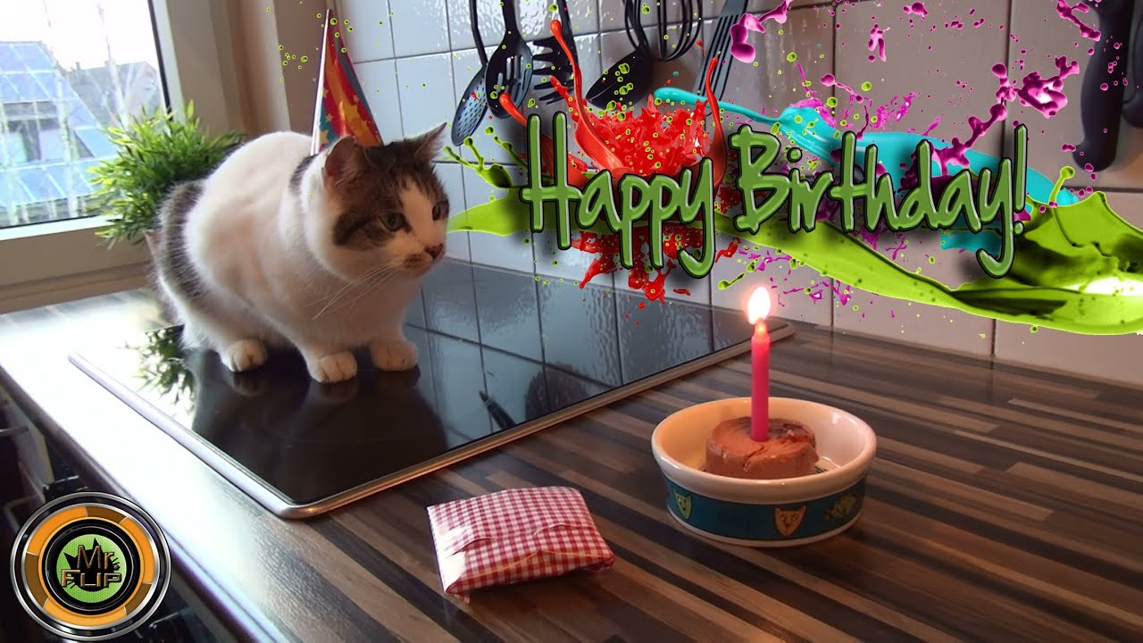 Cat Birthday With A Funny End Youtube