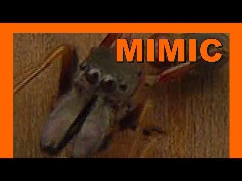 ant-mimic-jumping-spider---japan-myrmarachne---real-japan-monsters-アリはハエトリグモを模倣---日本のモンスター