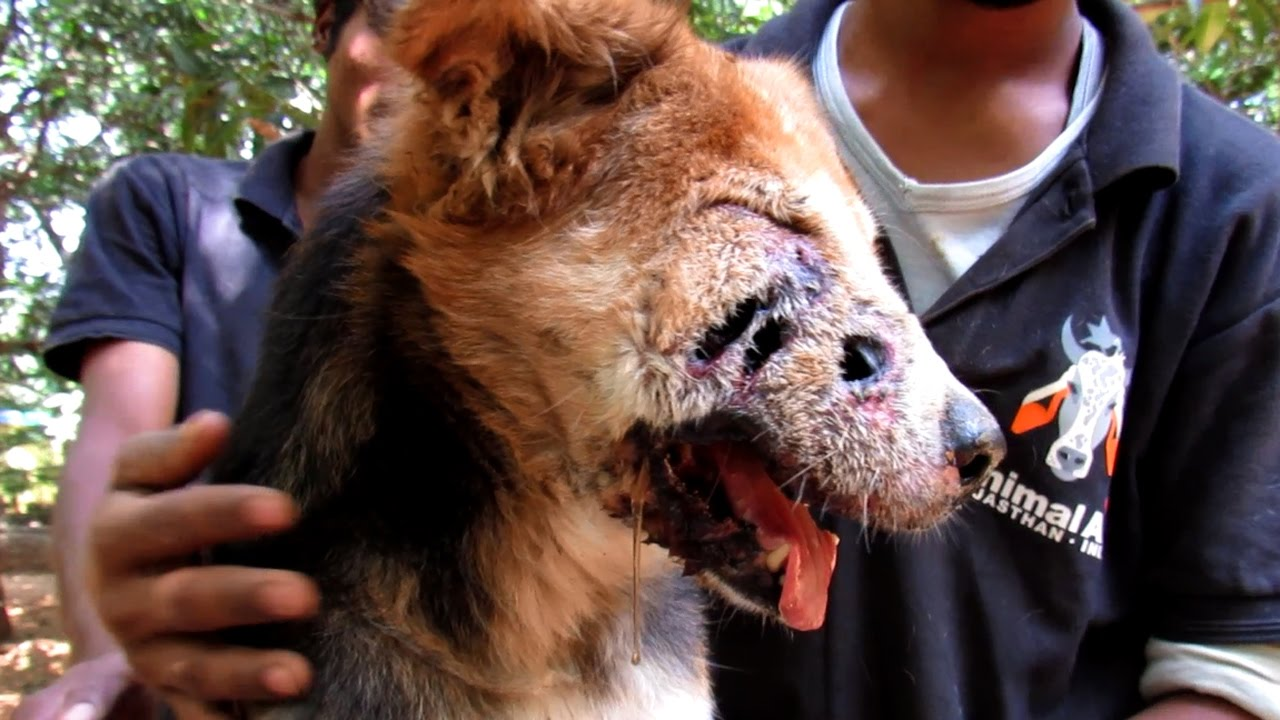 Dog rescued with shocking holes in his face survives