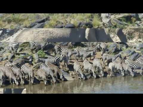 Amazing Animals in safari