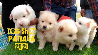 DOG SHOW PATIALA JANUARY 2021(Sanour) | CUTE PUPPIES DOGS COMPITION
