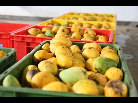 Sri Lankan farmers visit Thailand to improve quality of fruits, vegetables