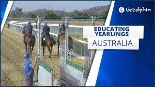 Educating yearlings in Australia