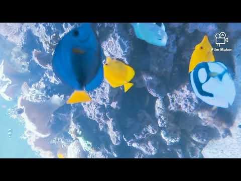 Exotic Aquarium Fishes and corals | Dubai Mall Underwater Zoo