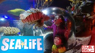 SEA LIFE Orlando Aquarium であそぶせんももあいしー